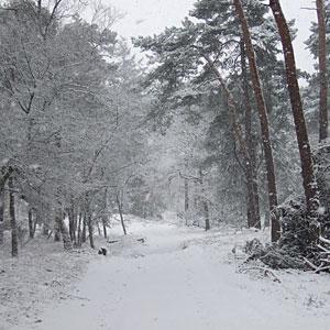 Stiltewandeling-seizoenen-januari