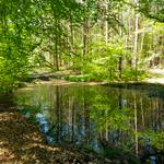 Wandelcoaching-de natuur als spiegel
