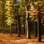 Wandelcoaching-ontdek de kracht van de natuur