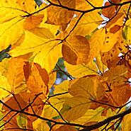 Stiltewandelingen-seizoenen-herfst
